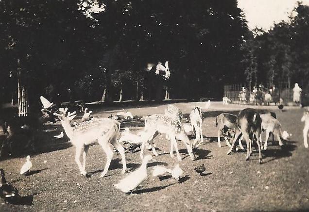 Herten in de jaren 90, historie Hertenkamp bloemendaal